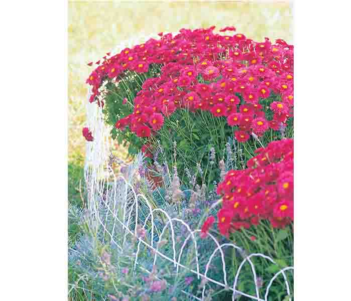Fence Roll Flat Top 14in.x25ft