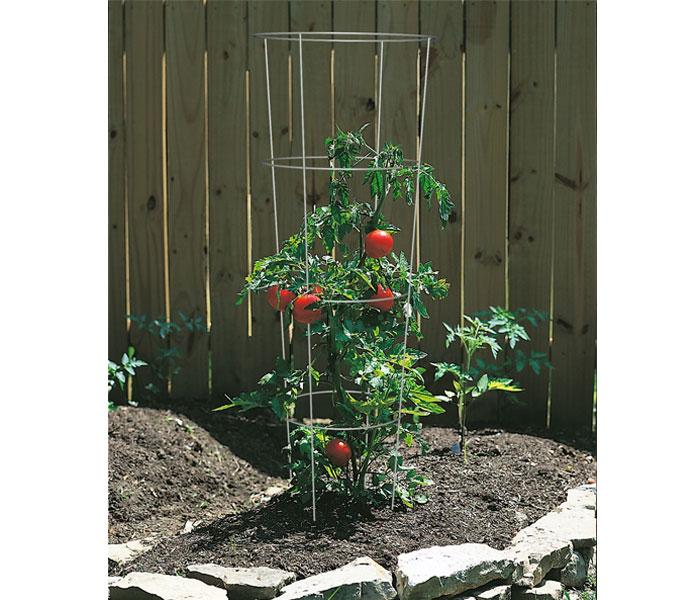 トマトケージプラントのサポート